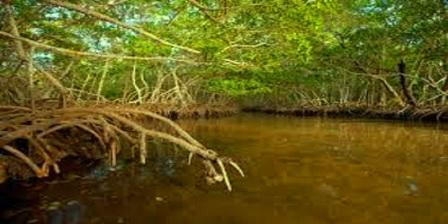 Wisata Taman Nasional Sembilang Sumatera Selatan wisata taman nasional sembilang alamat taman nasional sembilang jurnal taman nasional