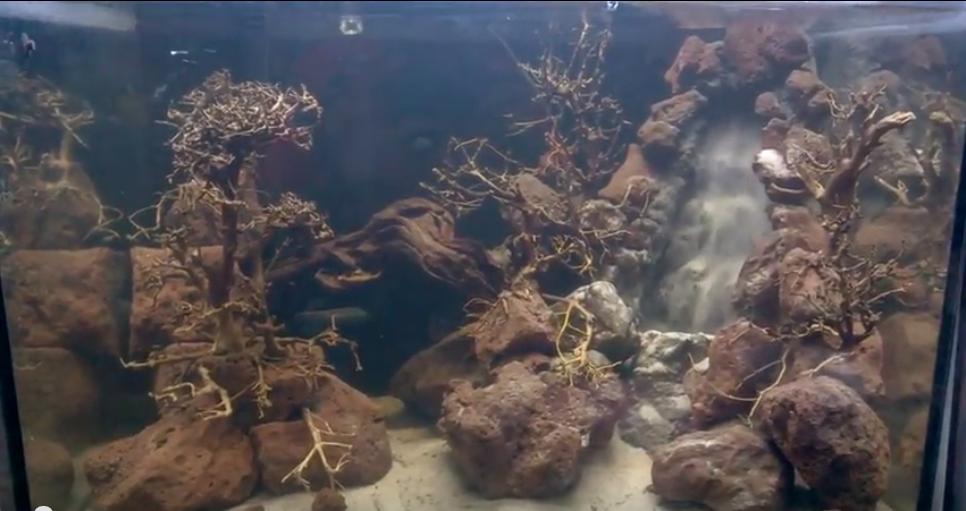 Bố cục thủy sinh suối thác demo 1