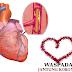 Penyakit Jantung Koroner dan Ring Jantung