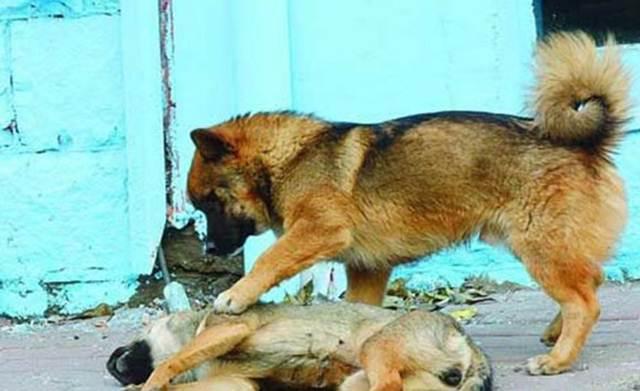 anjing membangunkan temannya