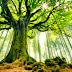 Pohon Yang Berbicara: Dunia Aneh dari Komunikasi Tanaman