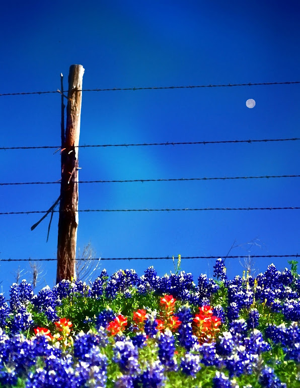 Bluebonnet Moon