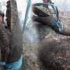 Penampakan Foto Ular Piton Raksasa Hangus Akibat Kebakaran Hutan, Bentuknya Mirip Anaconda