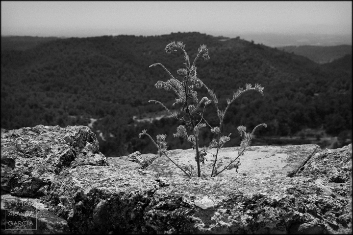 Olocau, fotografía, paisaje, naturaleza