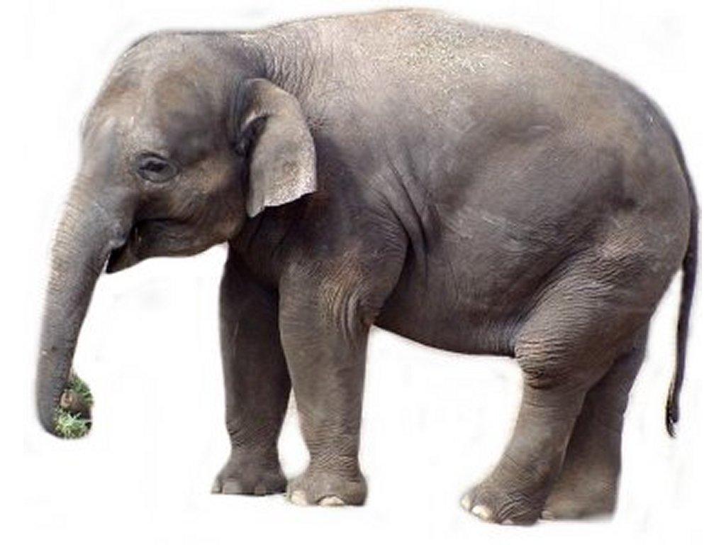 An Elephant a Day: Elephant No. 234: Smudge Art