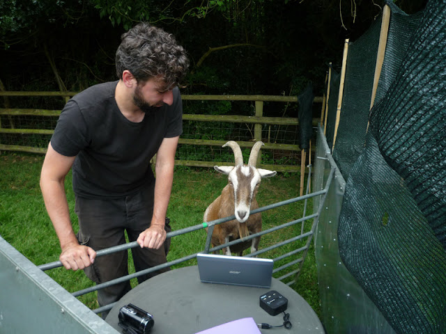 Goats show surprisingly dog-like skills, like this one taking part in research. Here's how to care for pet goats.