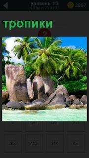 Экзотический пляж в тропиках с пальмой на берегу и большие камни вокруг