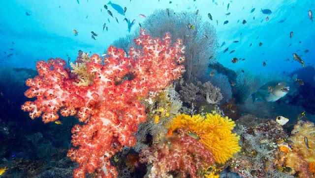Pesona bawah laut Raja Ampat