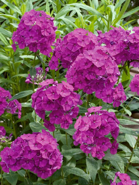 Top plants to attract butterflies to your garden.