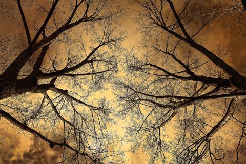 Tree health care Alpharetta Georgia