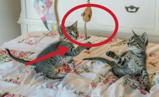 Cara Membuat Mainan Kucing Sendiri di Rumah yang Sederhana dan Mudah