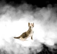 Tabagisme passif : le tabac nuit à la santé de votre animal !