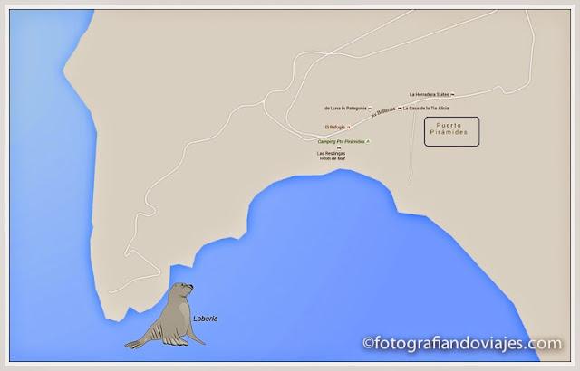 Lobería cerca de Puerto Pirámides