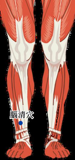 腦清穴位 | 腦清穴痛位置 - 穴道按摩經絡圖解