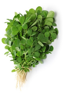 whole plants of Methi