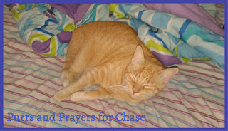 Purrs and Prayers for Chase