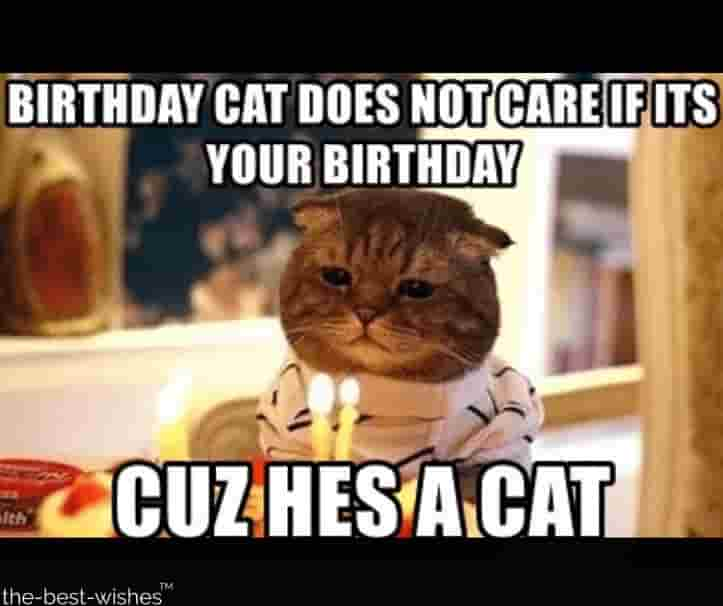 hilarious memes cat does not care bday image