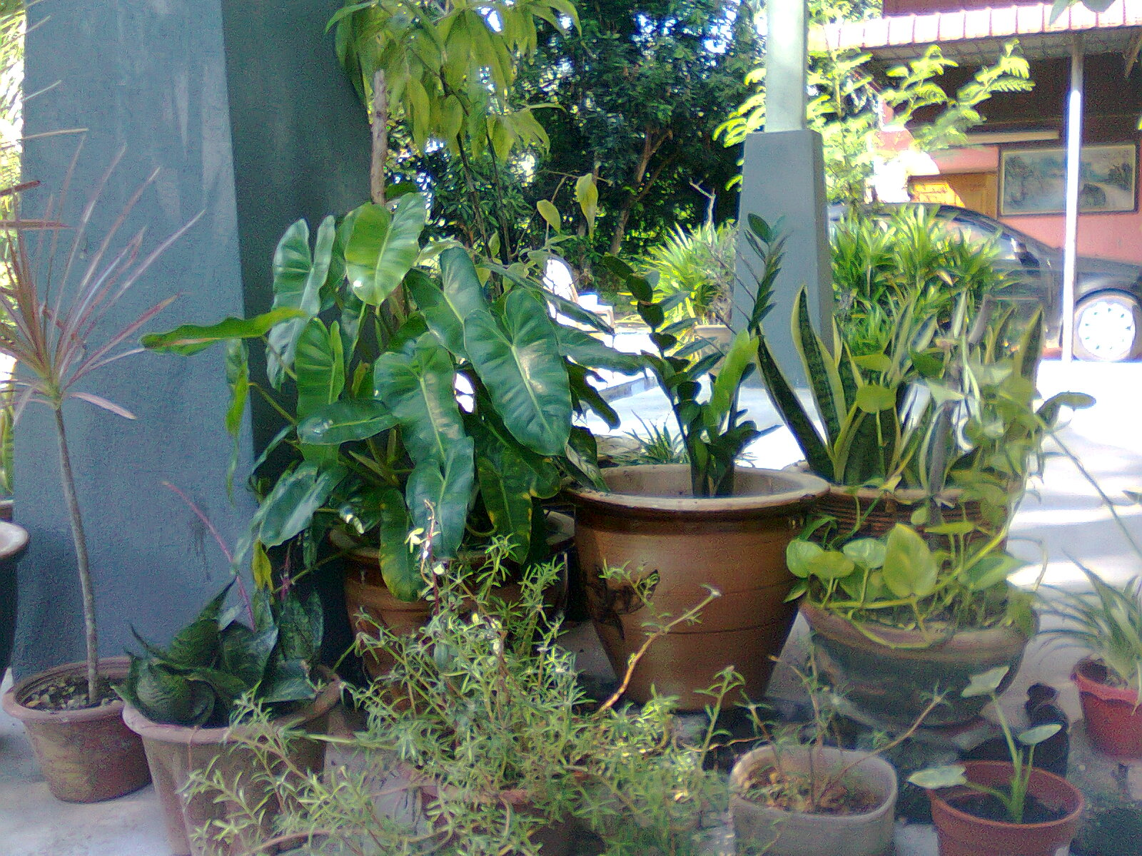Aku Sengaja Menyembunyikan Pokok2 Di Belakang Tiang Rumah Tujuannya Ialah Supaya Pokok Tidak Terlalu Terdedah Kepada Sinaran Matahari Just Kena