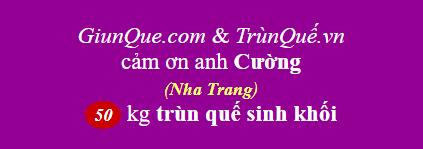 Trùn quế Nha Trang