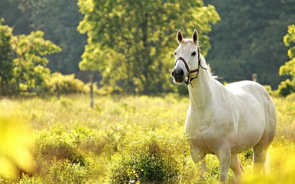 White Horse Images Grazing in the Field