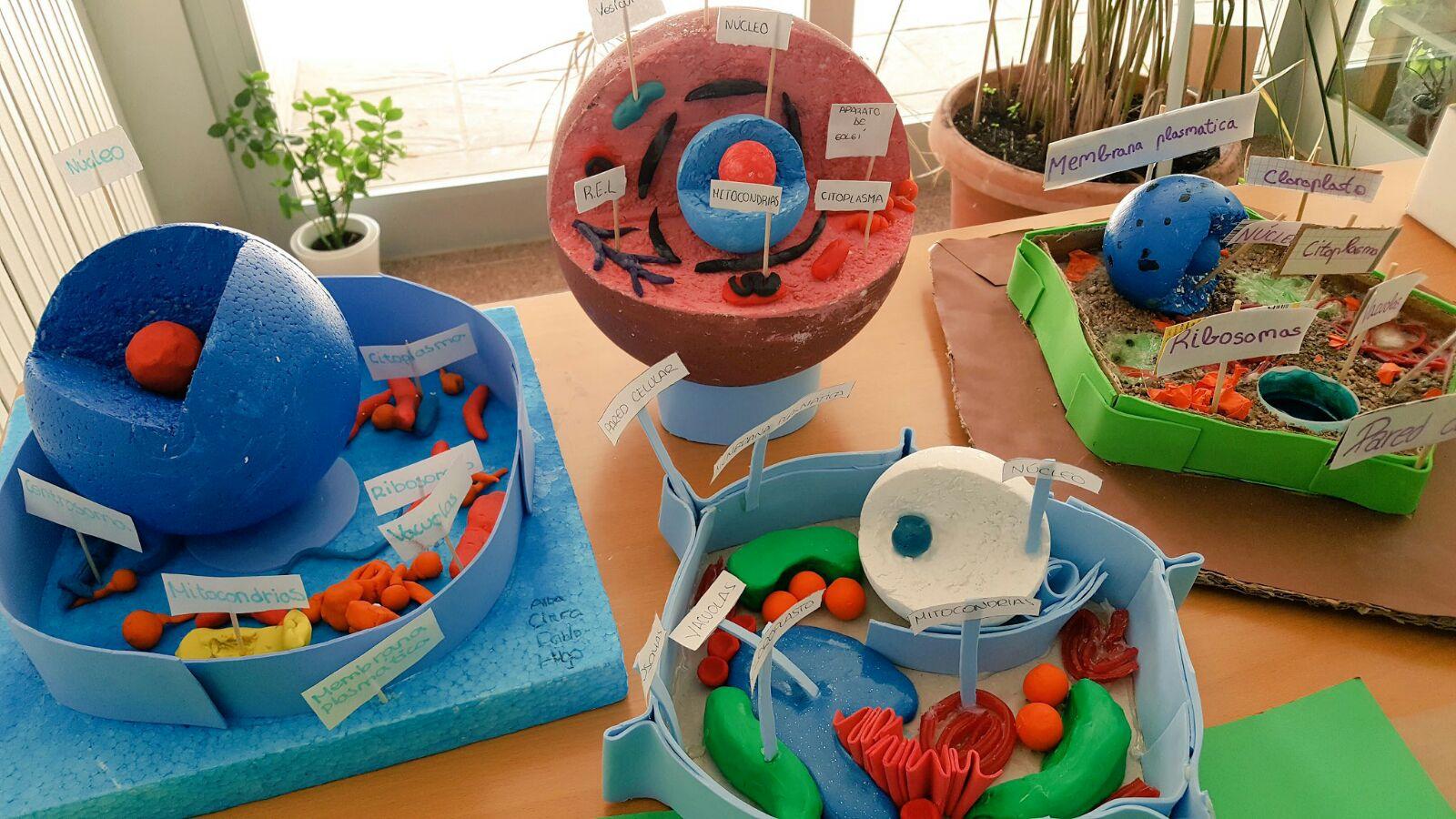 La celula como origen de la vida hps - Mobilifici san marino ...