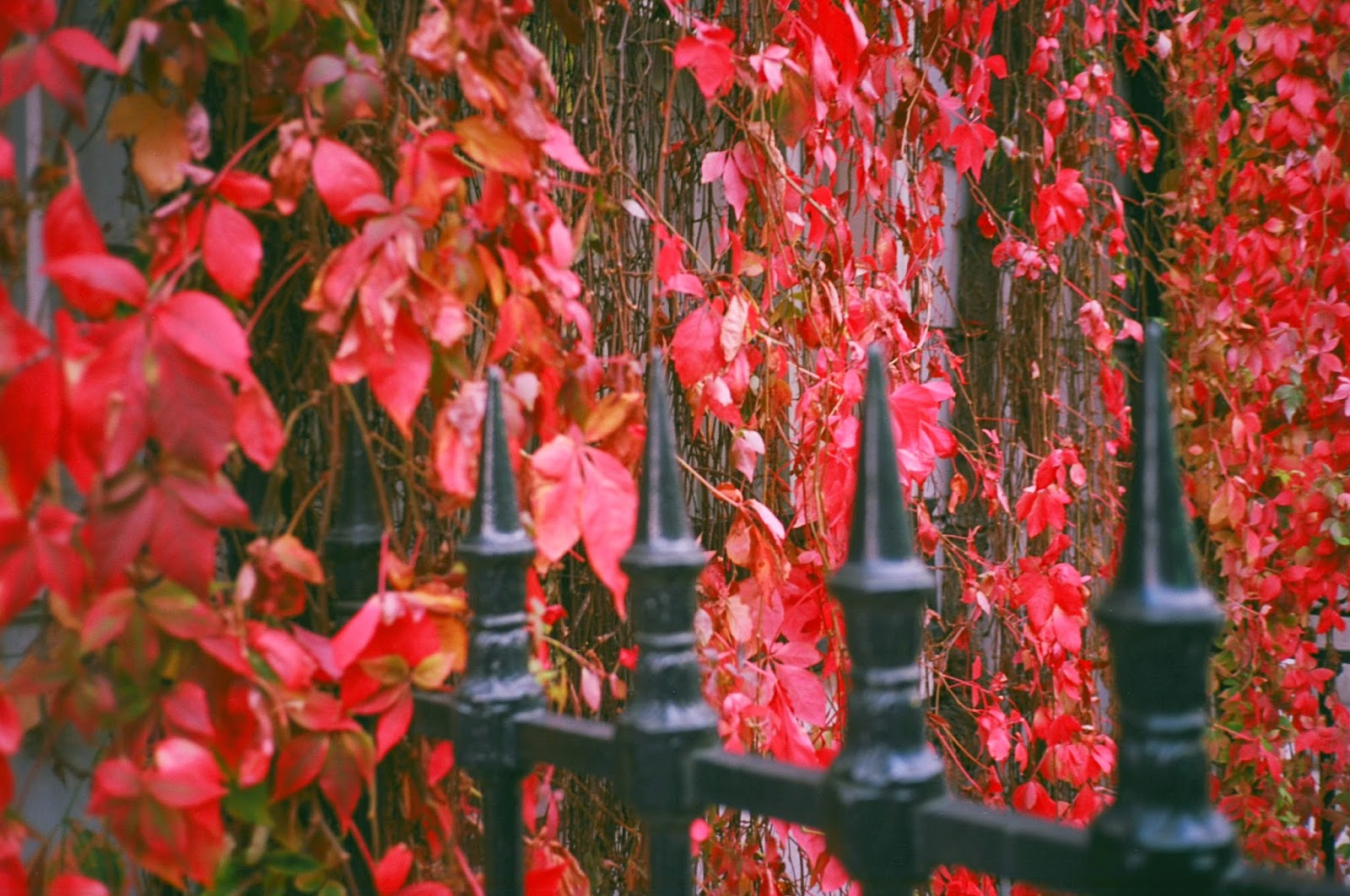PRIVATE MEDICINE, RAILINGS, AUTUMN LEAVES, COSMETIC SURGERY, HARLEY STREET, LONDON © VAC 100 DAYS / 4  MILLION CONVERSATIONS