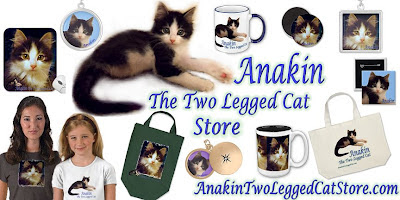 Anakin The Two Legged Cat Zazzle Store anakintwoleggedcatstore.com