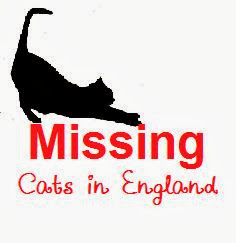Missing Cats in England