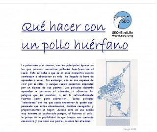 http://www.seo.org/media/docs/pollohuerfano2.pdf