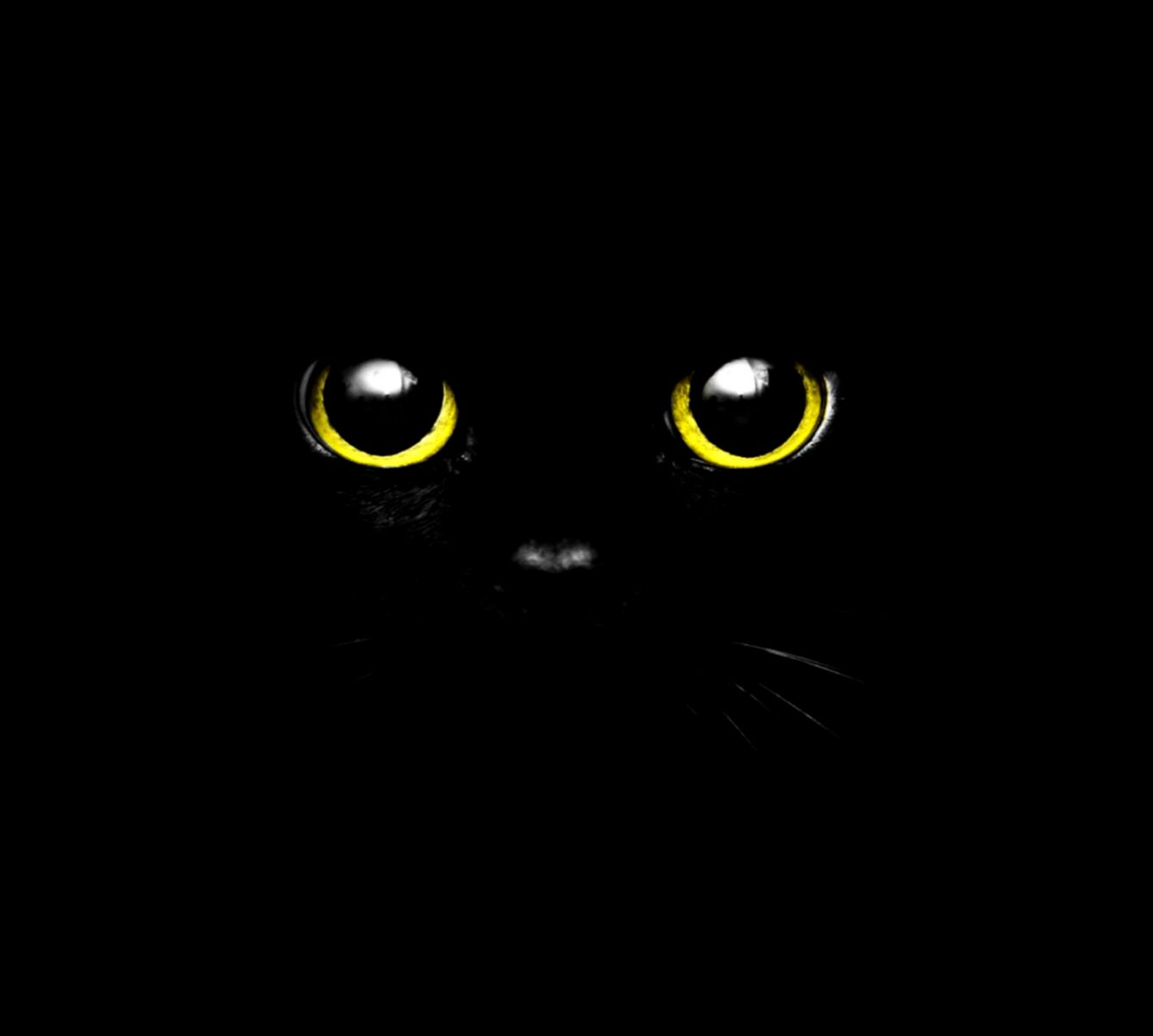 Black Cat Eyes Wallpaper Views Wallpapers