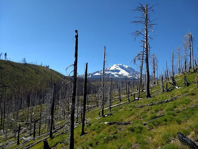 Climate change causing more severe wildfires, larger insect outbreaks in temperate forests