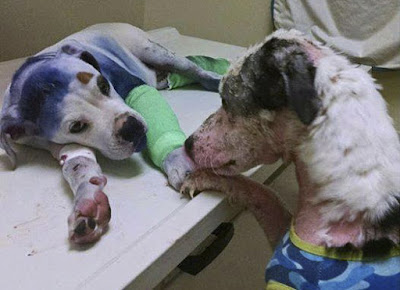 Conoce la entrañable historia de amistad de dos perros maltratados