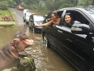 Biaya Masuk Taman Safari,tiket masuk,taman safari,harga tiket masuk,harga tiket,taman safari bogor,wahana taman safari,promo taman safari,taman safari cisarua,promo tiket,jam buka,biaya masuk,