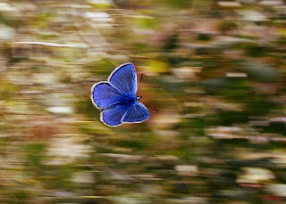 teori efek kupu-kupu, butterfly effect