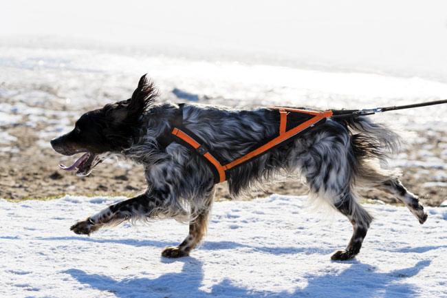 Smycz do biegania z psem