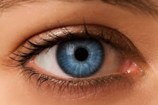 BEST FOOD TO EAT TO IMPROVE EYESIGHT