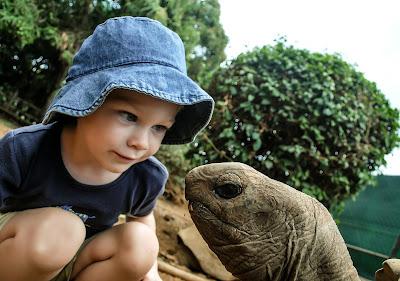 Dete i kornjača