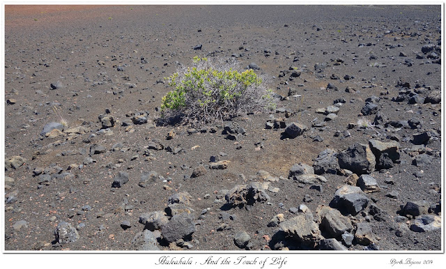 Haleakala: And the Touch of Life