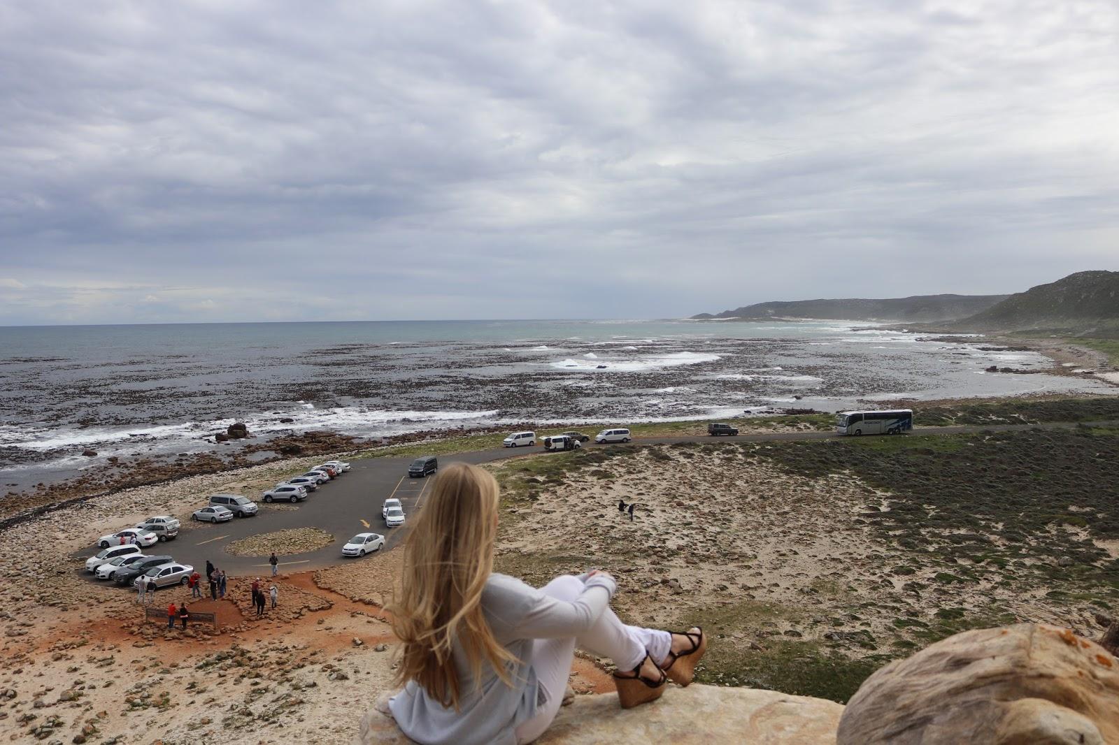 Cape of Good Hope Kalanchoe