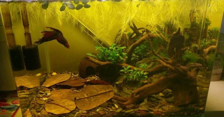 Aquascape Gallery The Biotope Aquarium And The Biotope Style Aquascaping