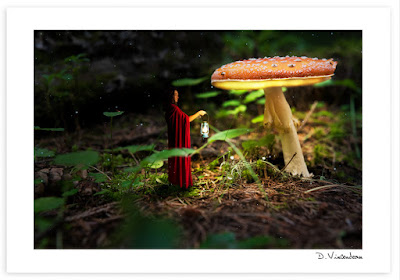 Sous un champignon