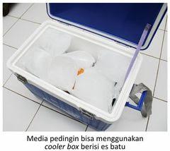 pendinginan vaksin dengan cooler box berisi es batu