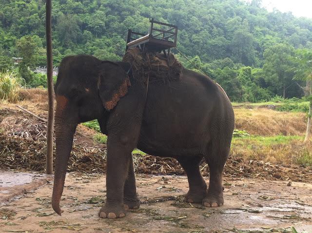 Nuestro primer elefante visto de cerca
