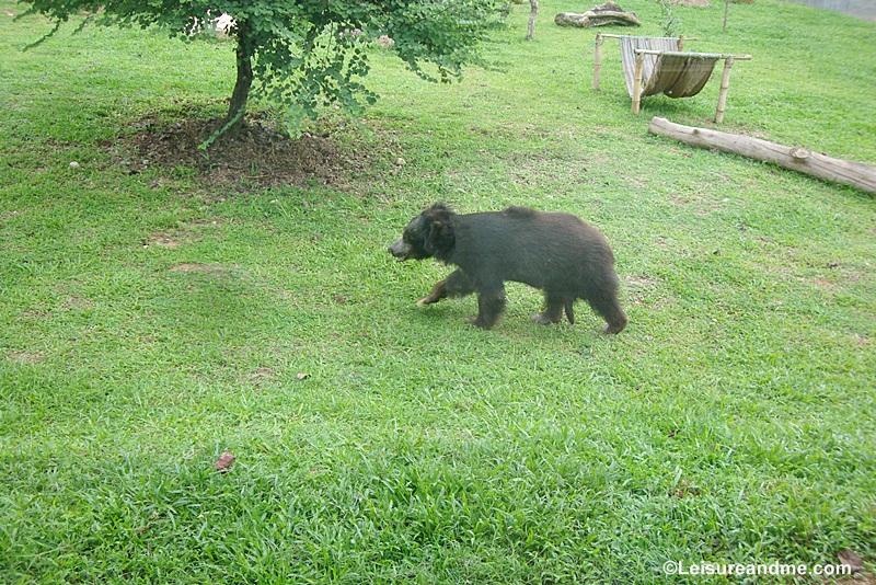Pinnawala Zoo