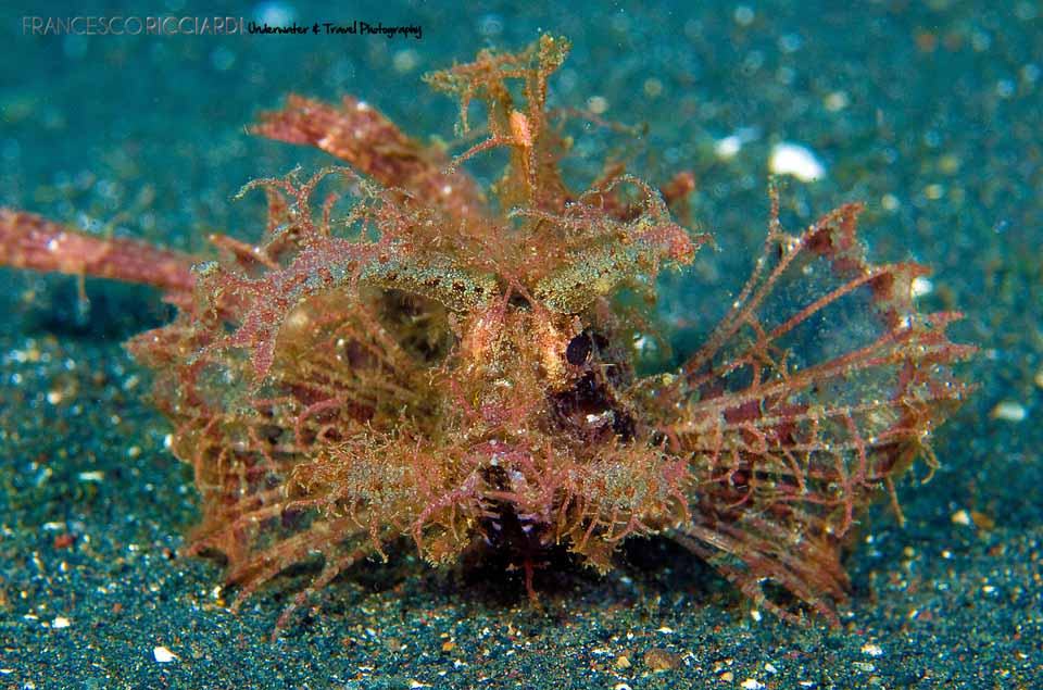 Avengers Animated Wallpaper Scorpion Fish Pictures Dwito Wallpaper