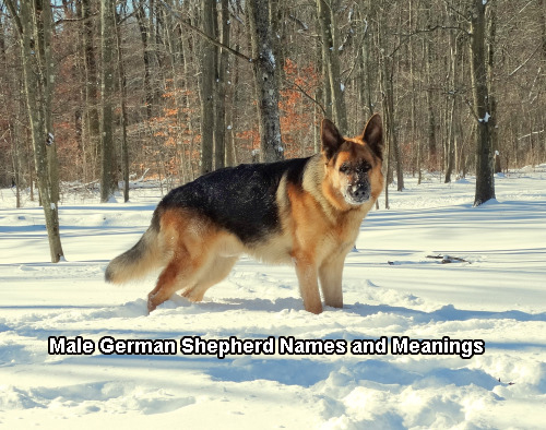 Names For A Male Dog German Shepherd