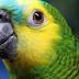 Papagaio entrega traição de marido com empregada e caso vai parar na delegacia