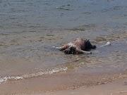 Corpo não identificado é encontrado na Lagoa de Urucará em Arês