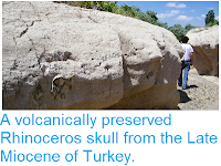 http://sciencythoughts.blogspot.co.uk/2014/06/a-volcanically-preserved-rhinoceros.html