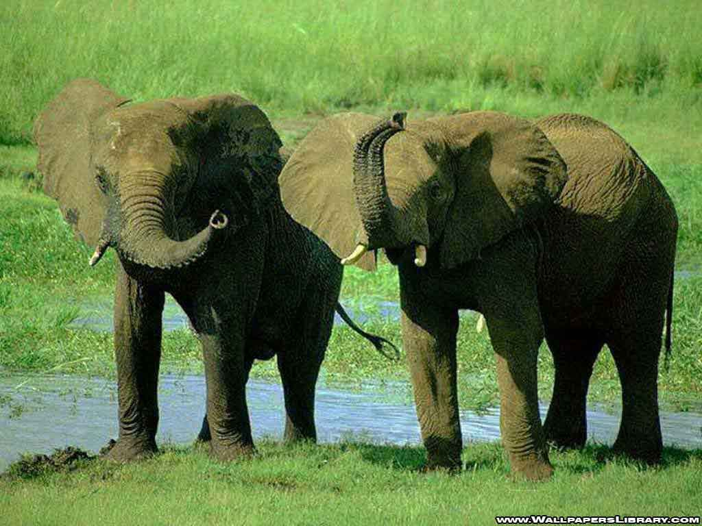 Bmw Park Avenue >> Free Wallpapers Blog: elephant background